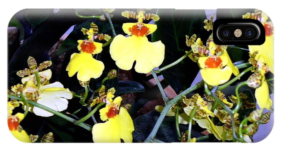 Orchids IPhone X Case featuring the photograph A Ballet Of Tiny Orchids by Mindy Newman