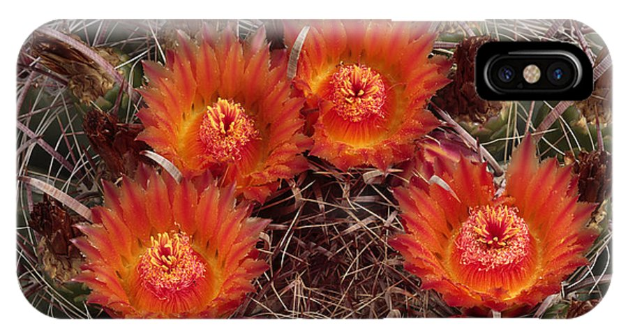 Arizona IPhone X Case featuring the photograph A Barrel Cactus Is Blooming by George Grall
