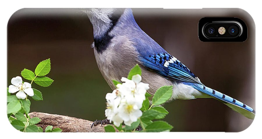Blue IPhone X Case featuring the photograph A Bluejay Bouquet by Andy Favors