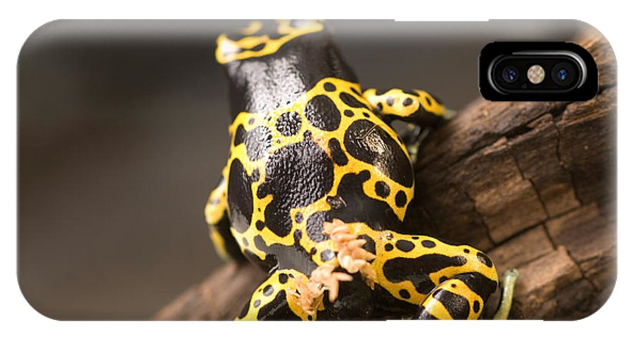 Nobody IPhone X Case featuring the photograph A Bumblebee Or Yellow-backed Poison by Joel Sartore
