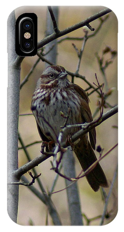 Birds IPhone X Case featuring the photograph A Chipping Sparrow by Ben Upham III