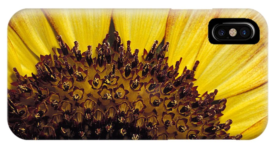 Sunflower IPhone X Case featuring the photograph A Close-up Detail Of A Sunflower Head by Jason Edwards