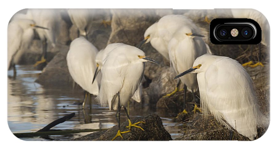 Birds IPhone X / XS Case featuring the photograph A Congregation Of Egrets by Bruce Frye