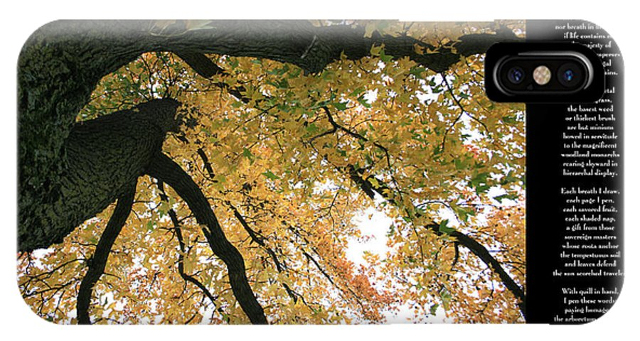 Tree IPhone X Case featuring the photograph A Different Perspective W Poem by David Dunham