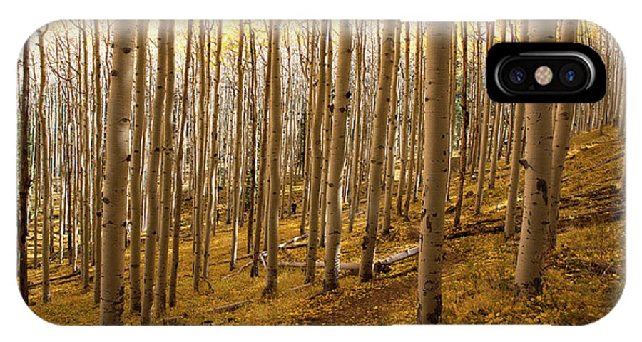Autumn IPhone X Case featuring the photograph A Forest Of Aspens by Sue Cullumber