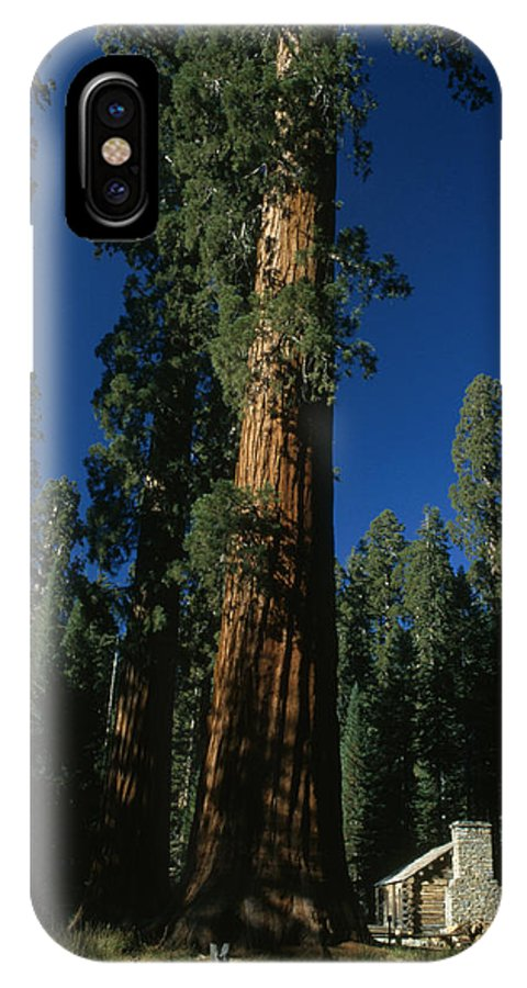 Outdoors IPhone X Case featuring the photograph A Giant Sequoia Tree Towers by Phil Schermeister