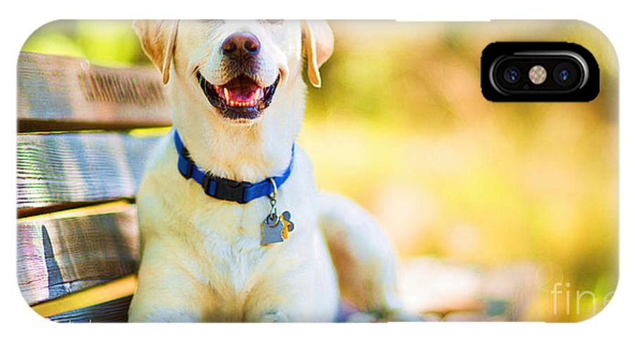 Dogs IPhone X Case featuring the mixed media A Good Day On The Bench by Garland Johnson
