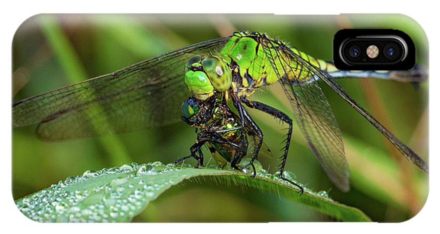 Dragonfly IPhone X Case featuring the photograph A Green Dragon's Breakfast by Artful Imagery