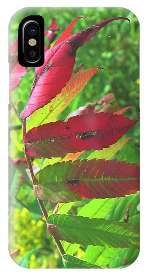 Leaves IPhone X Case featuring the photograph A Hard Tough Summer by Ian MacDonald