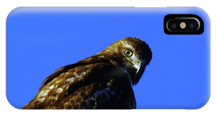 Hawks IPhone X Case featuring the photograph A Hawk Looking Back by Jeff Swan