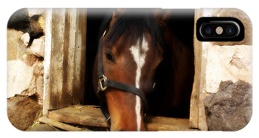Horse IPhone X Case featuring the photograph A Little Nibble by Linda Mishler