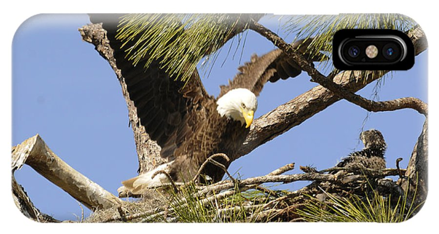 Bald Eagle IPhone X Case featuring the photograph A Mothers Care by Keith Lovejoy
