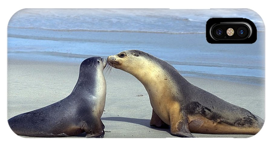 Sea Lion IPhone X Case featuring the photograph A Mothers Love by Mike Dawson