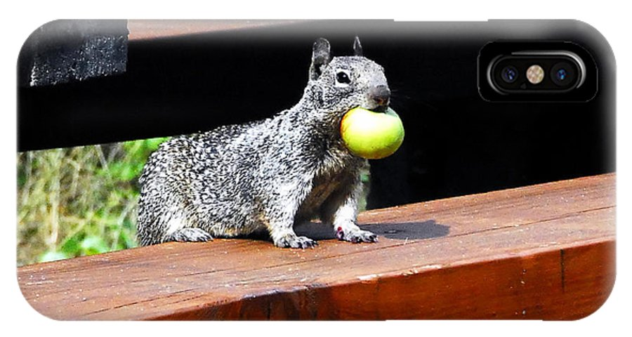 Squirrel IPhone X Case featuring the photograph A Mouthful by David Lee Thompson
