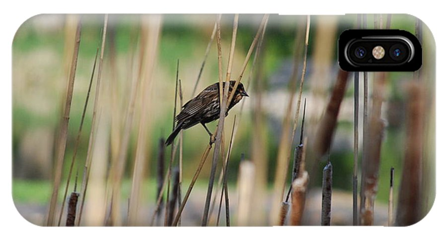 Plumage Sparrow IPhone X Case featuring the photograph A Plumage Sparrow by Ee Photography