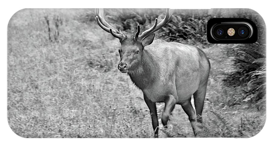 Olympic Elk IPhone X Case featuring the photograph A Rack Of Antlers - Roosevelt Elk - Olympic National Park Wa by Christine Till
