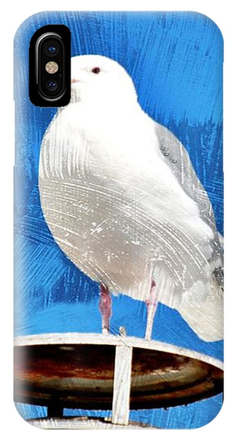 Seagulls IPhone X Case featuring the photograph A Seagull Pauses by Debra Miller