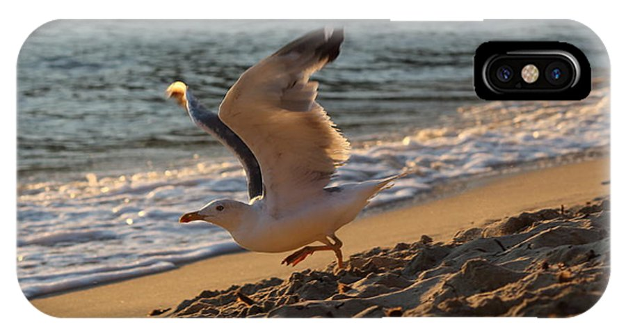 Seagull IPhone X / XS Case featuring the photograph A Seagull Starts His Flight by Samantha Mattiello