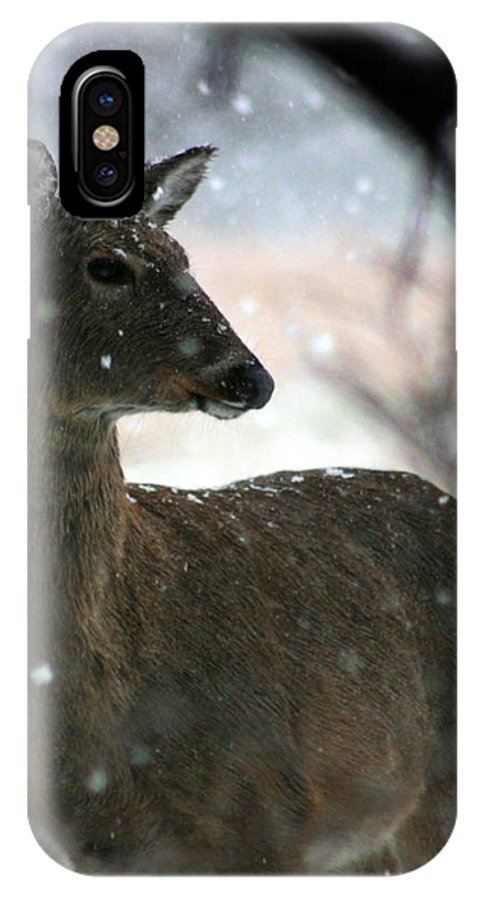 Deer IPhone Case featuring the photograph A Sideways Look by David Dunham