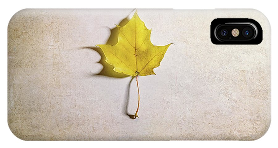 Maple Leaf IPhone X Case featuring the photograph A Single Yellow Maple Leaf by Scott Norris