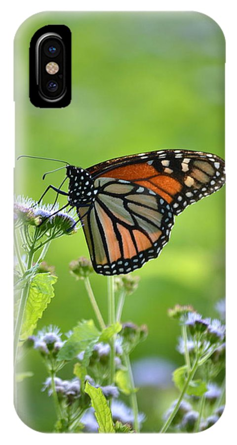 Monarch IPhone X Case featuring the photograph A Sip Of Mist by JD Grimes