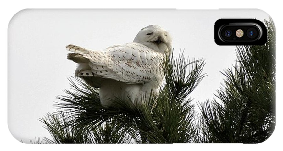 Snowy Owl IPhone X Case featuring the photograph A Smile For You by Jo-Ann Matthews