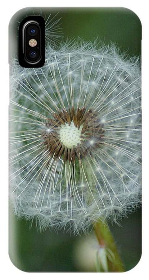 Flowers IPhone X Case featuring the photograph A Star Leaves Home by Ben Upham III