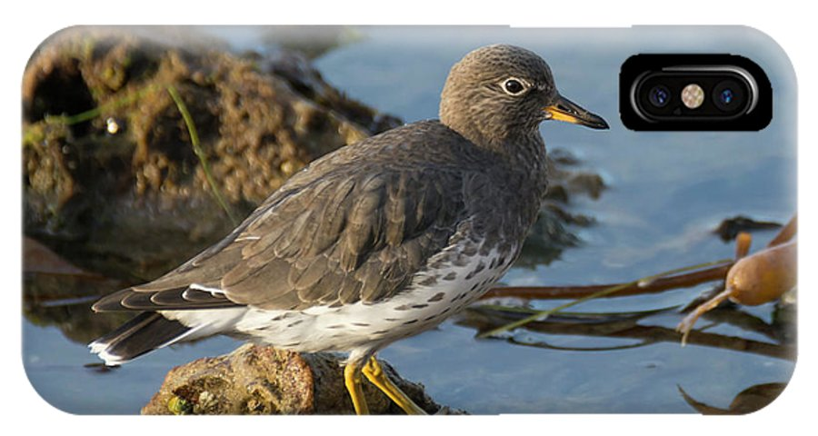 Bird IPhone X Case featuring the photograph A Surfbird At The Tidepools by Bruce Frye