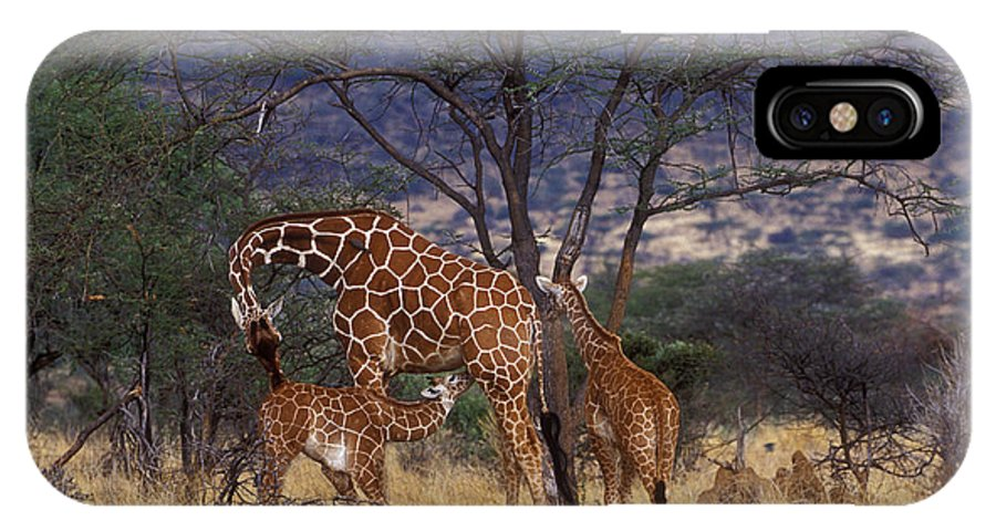 Giraffe IPhone X Case featuring the photograph A Tender Moment by Sandra Bronstein