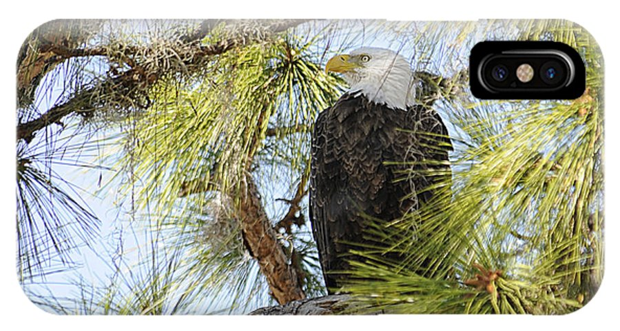 Bald Eagle IPhone X Case featuring the photograph A Watchful Eye by Keith Lovejoy