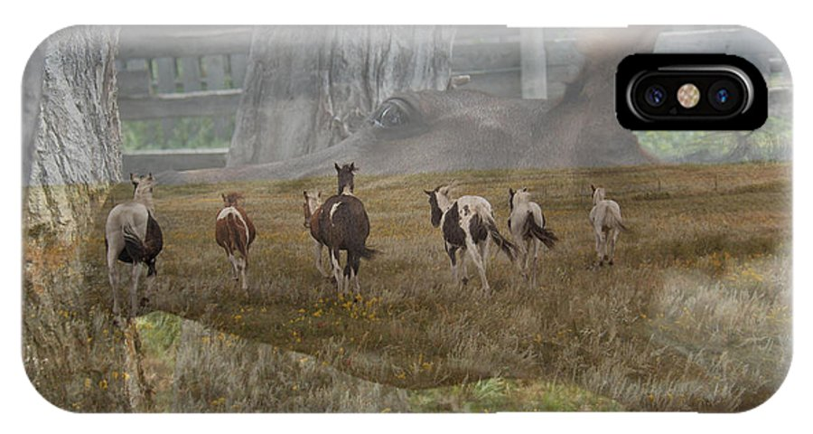Horses Horse Colt Foal Barn Ranch Herd Stallion IPhone X Case featuring the photograph A Way Of Life. by Andrea Lawrence