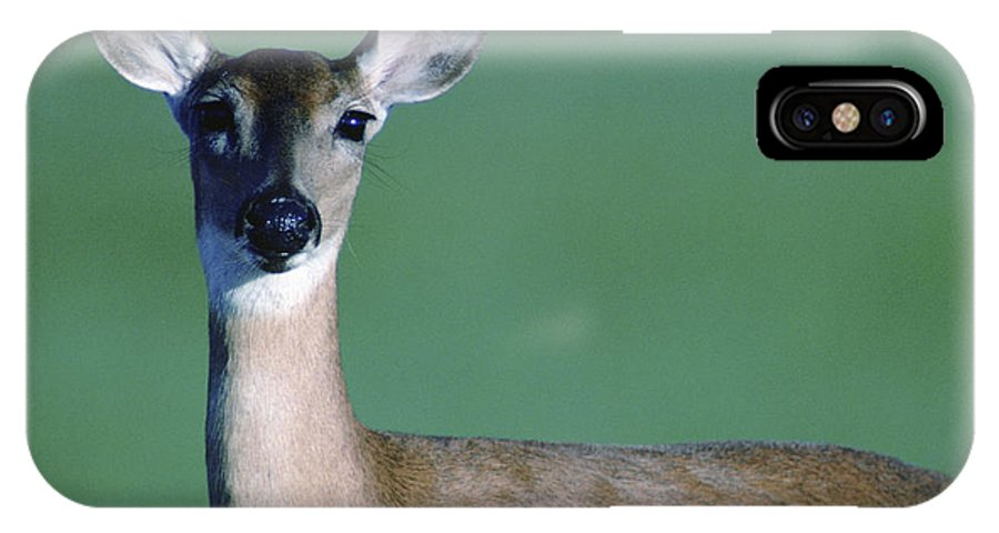 White-tailed Deer IPhone X Case featuring the photograph A White-tailed Deer On The Prairie by Joel Sartore