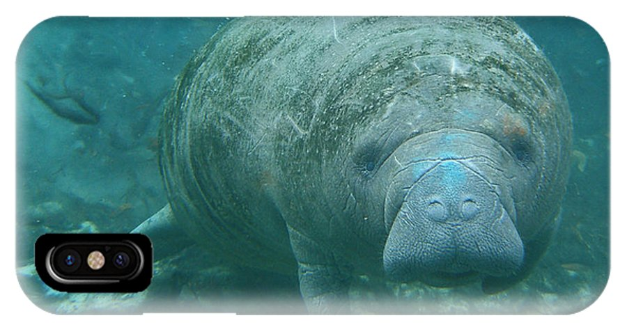Joy IPhone X Case featuring the photograph About To Meet A Manatee by Kimberly Mohlenhoff