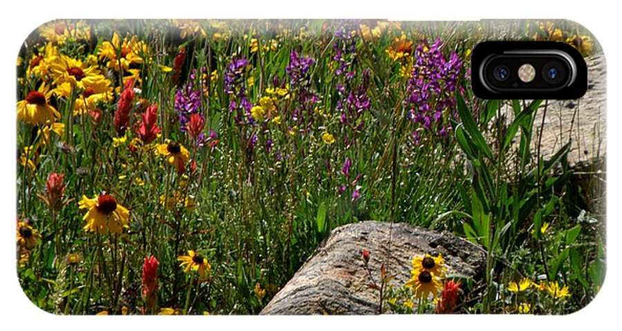 Flowers Wildflowers Colorado Rocky Mountains Meadow Colorful Indian Paintbrush IPhone X Case featuring the photograph Abundance by George Tuffy