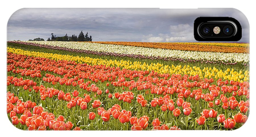 Tulips IPhone X Case featuring the photograph Across Colorful Fields by Mike Dawson