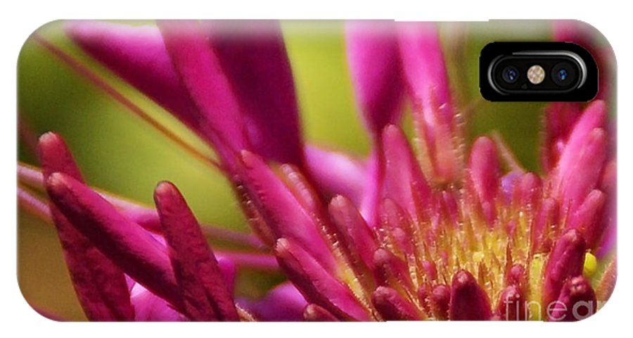 Flower IPhone X Case featuring the photograph Actiniaria by Linda Shafer