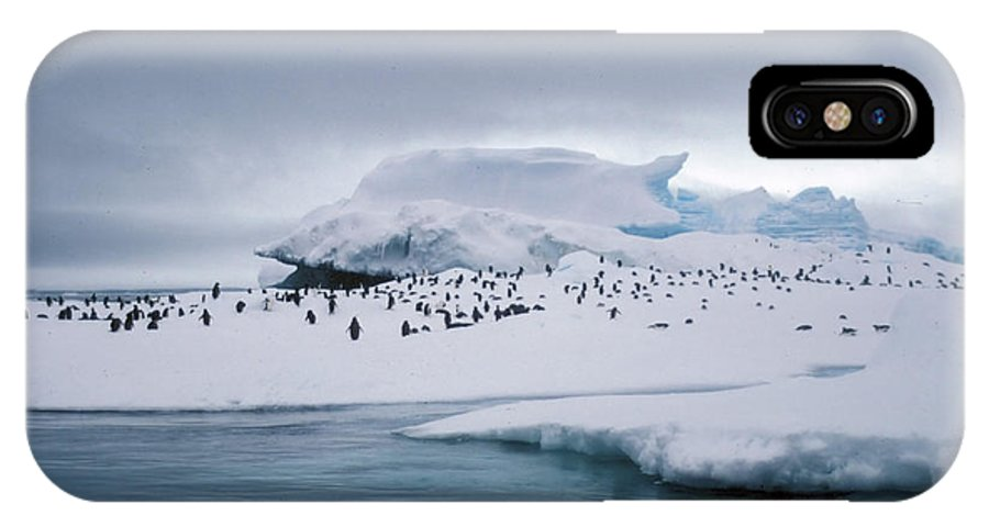 Panguin IPhone X Case featuring the photograph Adelie Penguins On Iceberg Weddell Sea by Brian Lockett