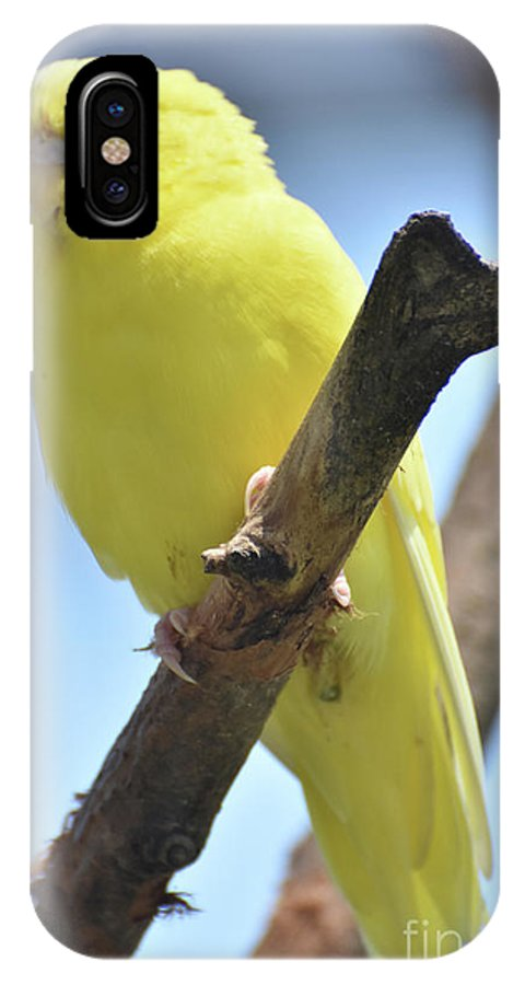 Budgie IPhone X Case featuring the photograph Adorable Close Up Of A Yellow Parakeet by DejaVu Designs