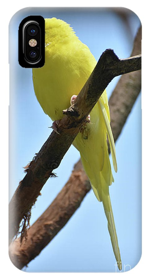 Budgie IPhone X Case featuring the photograph Adorable Little Yellow Parakeet In A Tree by DejaVu Designs