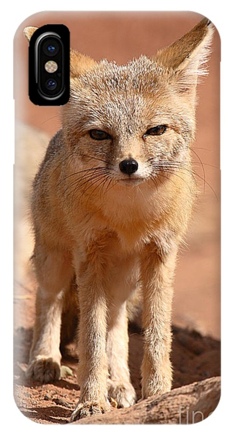 Fox IPhone X Case featuring the photograph Adult Kit Fox Ears And All by Max Allen