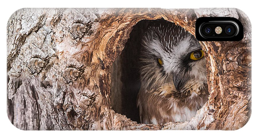 Adult Saw-whet Owl IPhone X Case featuring the photograph Adult Saw-whet Owl by Yeates Photography