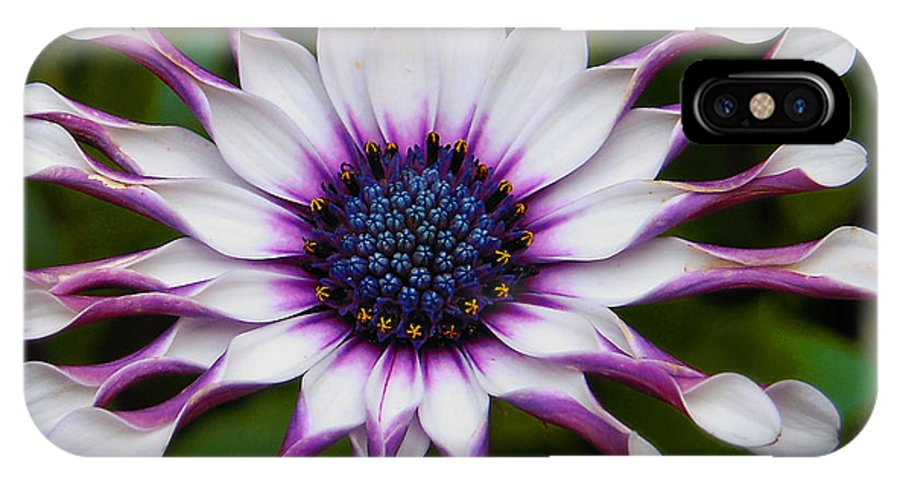 African IPhone X Case featuring the photograph African Daisy by Svetlana Sewell
