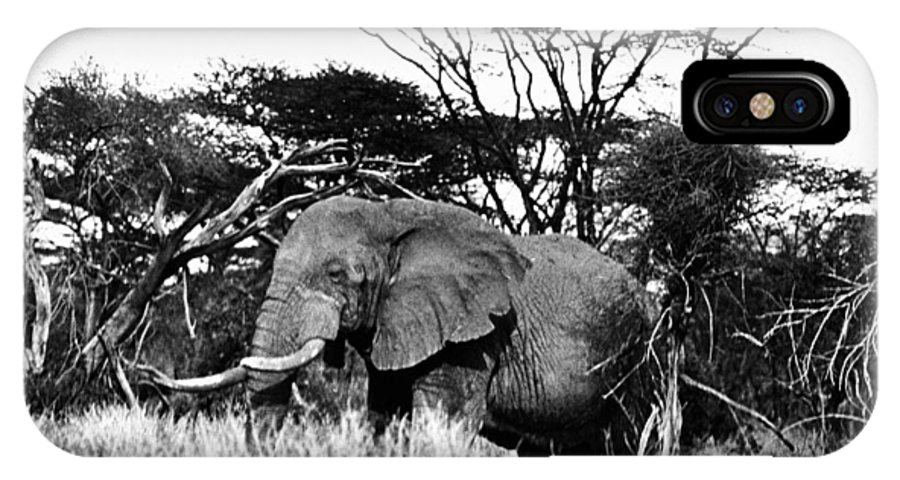 20th Century IPhone X Case featuring the photograph African Elephant by Granger