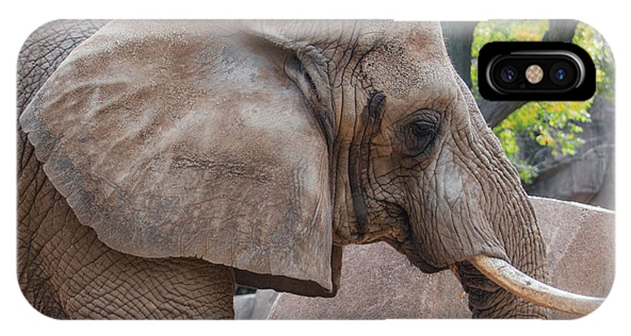 African Elephant IPhone X Case featuring the photograph African Elephant by Susan McMenamin