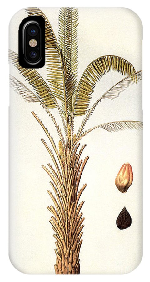 1780 IPhone X Case featuring the photograph African Oil Palm by Granger
