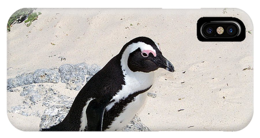 African Penguin Photography IPhone X Case featuring the photograph African Penguin by Evelyn Patrick