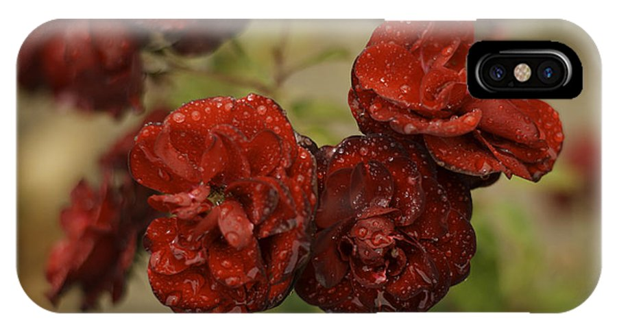 Flowers IPhone X / XS Case featuring the photograph After Rain by Stormy Mystique
