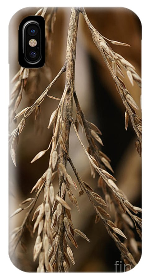 Corn IPhone X Case featuring the photograph After The Harvest - 1 by Linda Shafer