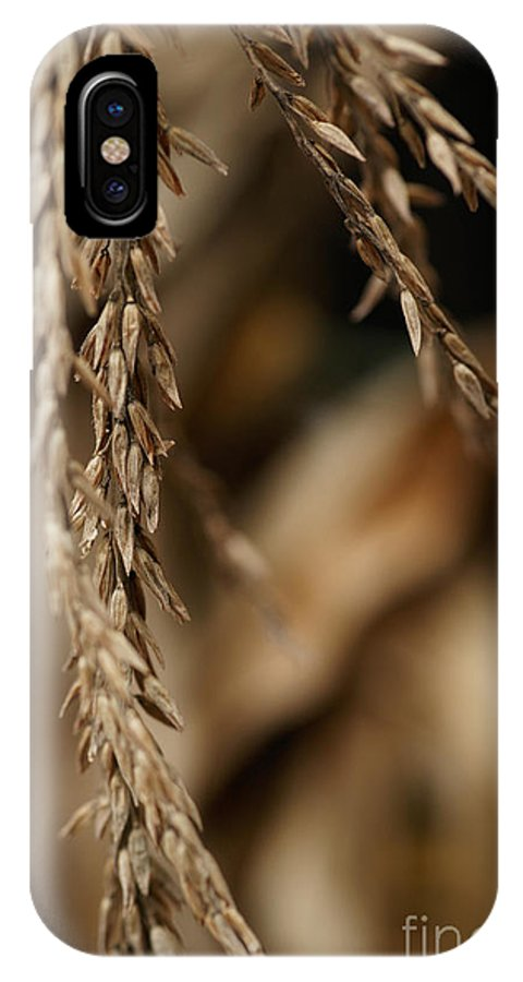 Corn IPhone X Case featuring the photograph After The Harvest - 3 by Linda Shafer
