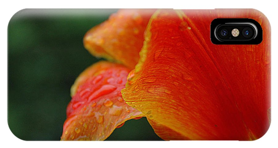 Close-up Tulip IPhone X Case featuring the photograph After The Rain by Jacqueline Milner